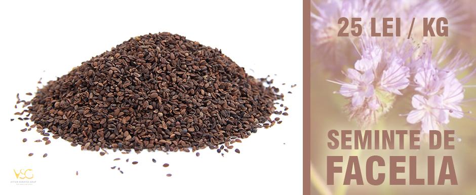 Semintele Facelia